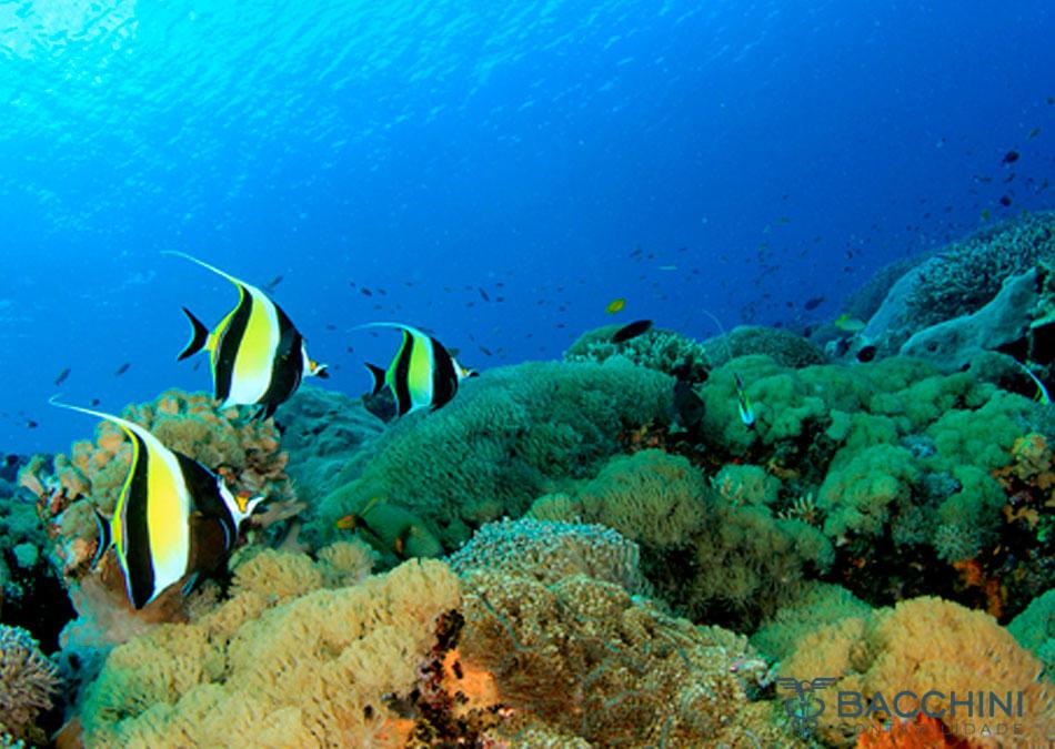 Direito Tributário na Defesa do Meio Ambiente Marinho
